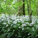 """""""Les plantes comestibles"""" excursion nature"""