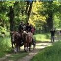 Le Jardin des Iris du Château de Vullierens